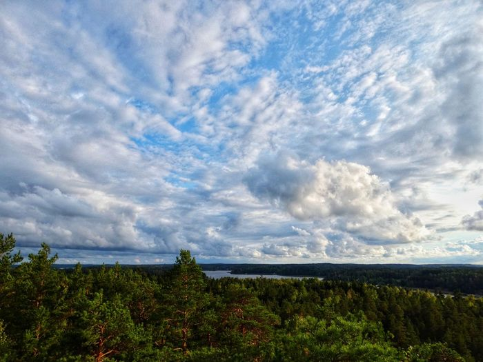 Treetop Treetops Sea Finland Kaarina Cloud - Sky High Angle View High Nature Finnish Nature Green Color Lookout Lookout Tower View From Above View Tree Rural Scene Sky Plant Landscape Cloud - Sky
