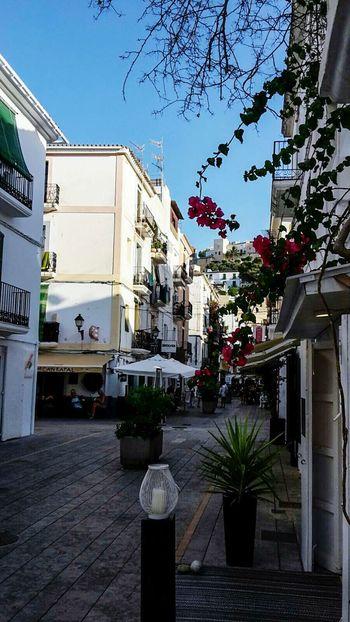 Sunshine Ibiza Stadt Insel Isla De Ibiza Balearen Blumen Ibiza Summerday Ibizatown Häuser