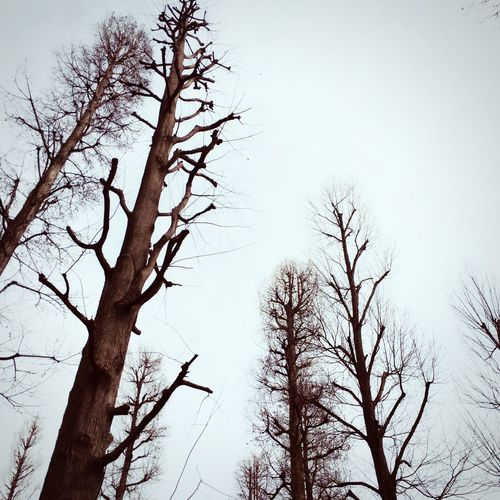 BareTrees Dead Tree Naked Trees and Overcast Winter Sky ⛄️☁️☁️