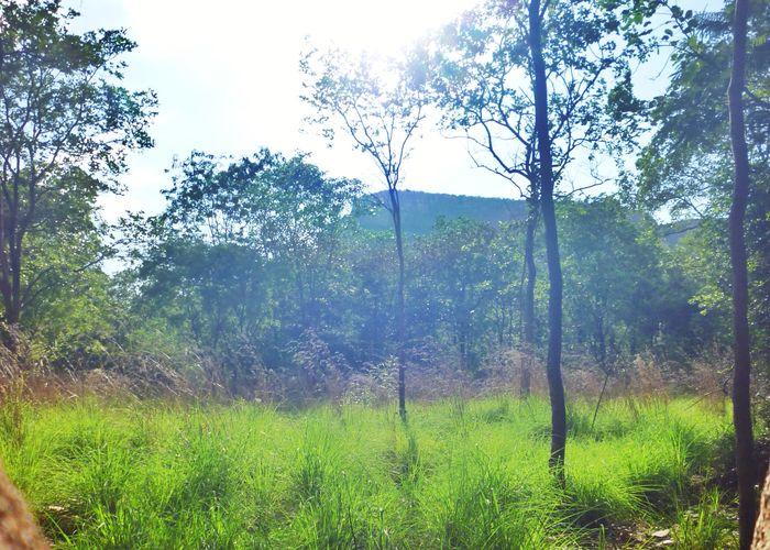 EyeEm Nature Lover Point And Shoot Camera Backlight Beautiful Trees Grass Panasonic Dmc Forestwalk Blue sunset #sun #clouds #skylovers #sky #nature #beautifulinnature #naturalbeauty photography landscape Deceptively Simple