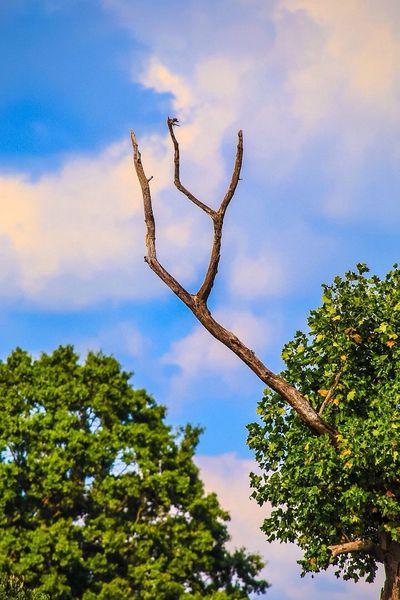 Tree Landscape Dead Tree Dead Branch