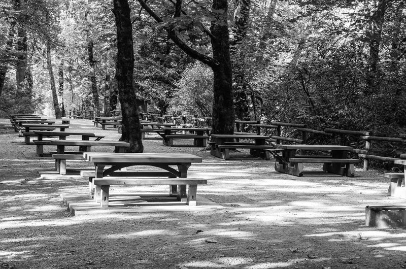 Picnic Tables at Goldstream Provincial Park Tree Plant Seat Bench Park Empty Nature Absence Park - Man Made Space Day Tree Trunk Trunk Growth Park Bench No People Outdoors Tranquility Sunlight Table Beauty In Nature Picnic Tables