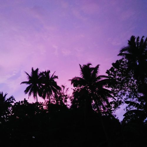 a purple sunset Tree Silhouette Palm Tree Sky Low Angle View No People Beauty In Nature Nature Night Sunset Outdoors