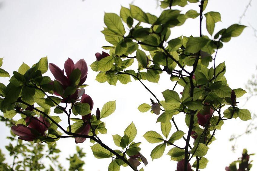 木蓮もありました* EyeEm Nature Lover Flower Porn Canon Leaf