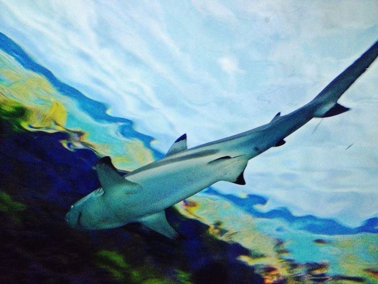 Shark Seaworld Seaworld San Diego Sea Life Ocean