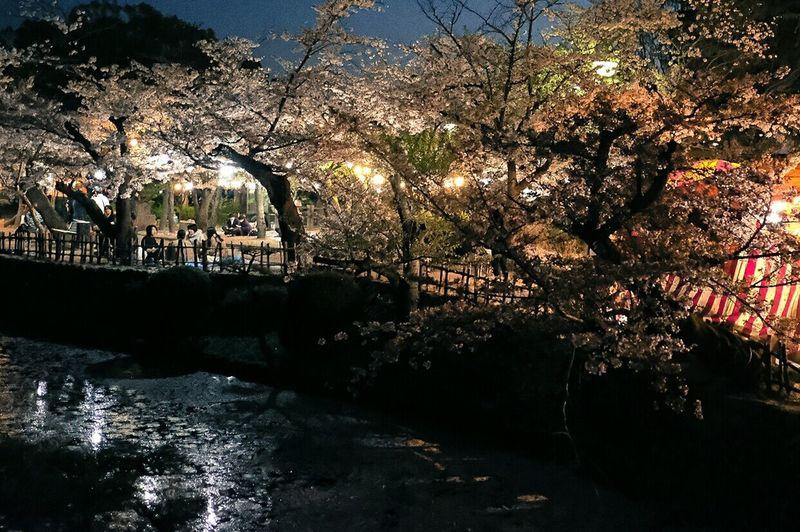 桜もそろそろ終わり。 Tree River Water Outdoors Nature Arts Culture And Entertainment Night Sakura Beauty In Nature X-PRO2 Xf23mmf2