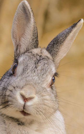 Cheese! Hi! Rabbit Animal Quality Time Nice Good Times EyeEmBestPics EyeEm Nature Lover Popular Photo Eye4photography  First Eyeem Photo TheWeekOnEyeEM EyeEm Best Edits EyeEm Gallery EyeEm Best Shots Nice Day Cute Beautiful Hello World Hello World