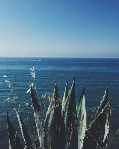Sea Nature Beauty In Nature Tranquil Scene Water Horizon Over Water Tranquility Scenics Growth No People Plant Agave Plant Coast Sea And Sky Blue Clear Sky Plant Day Sky