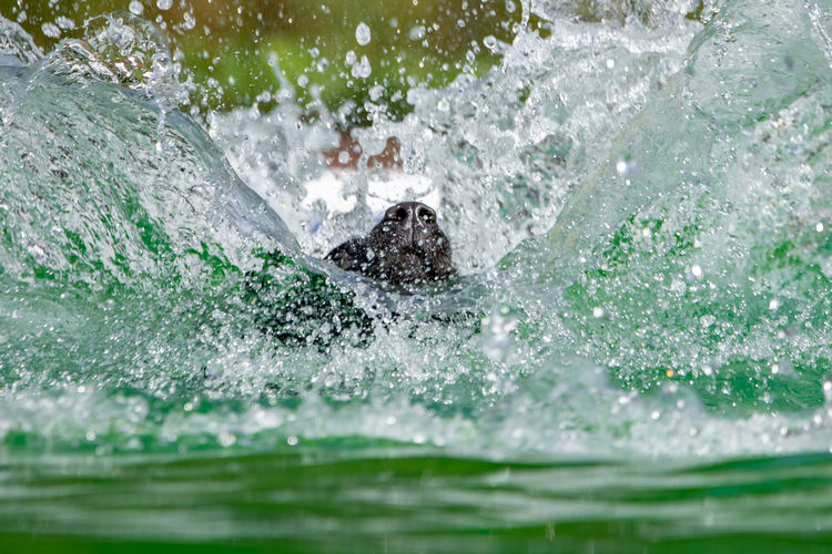 Close-up of dog swimming in sea