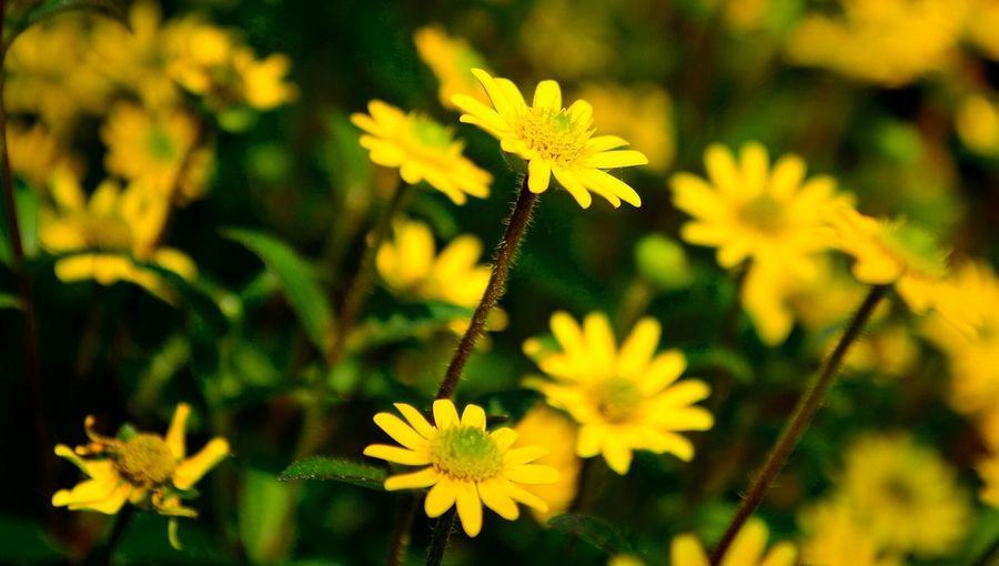 Nikon D5100  Macroclique StreamzooFlowers Flowerporn Flowers