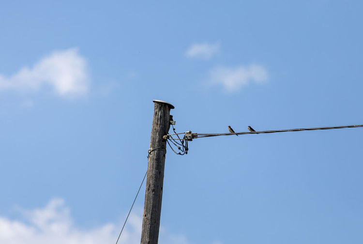 Low angle view of crane on wooden post against sky