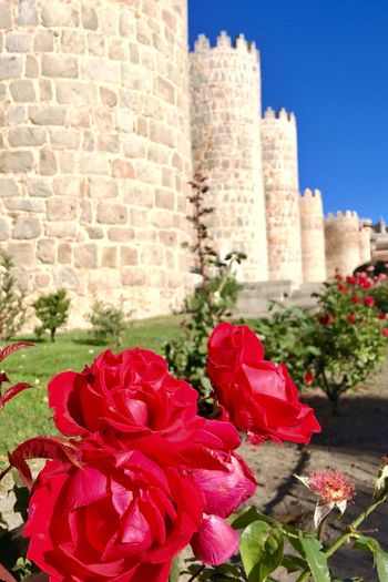 The Traveler - 2018 EyeEm Awards Live for the Story Taking Photos Enjoying Life Travel Destinations Castle Flower Plant Flowering Plant Red Rosé Nature Architecture Rose - Flower Built Structure Building Exterior