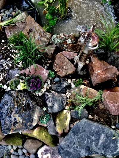 High Angle View Rock - Object No People Nature Outdoors Day Plant Close-up Pond Front Or Back Yard Garden Photography Flowerbed Tranquility Waterfall Beauty In Nature River Moss Plant Nature Water Tree Freshness Growth