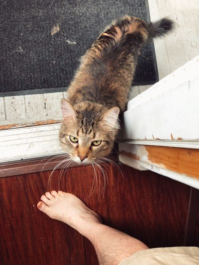 High angle portrait of cat with hand on wood