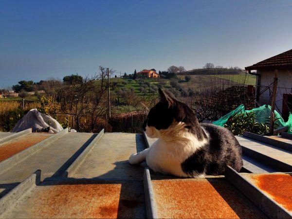 Cat♡ Sunny Day