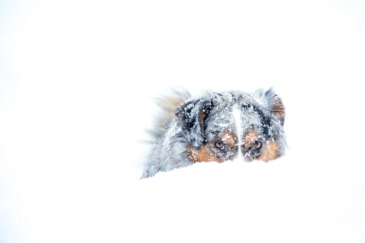 Dog Happy Anímals Hund Nature Snow White Background
