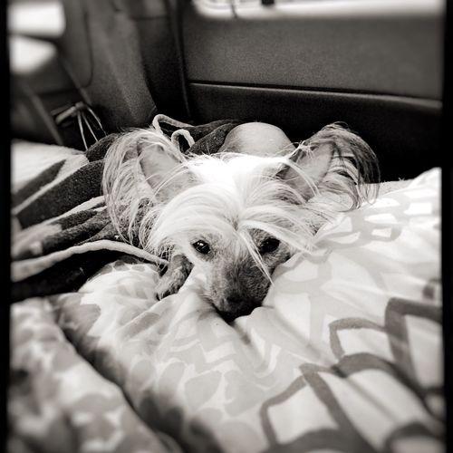 Blackandwhite Bw Dog Monochrome Ilovemydog Friends Bestfriend Photography IPhoneography Blankonoir