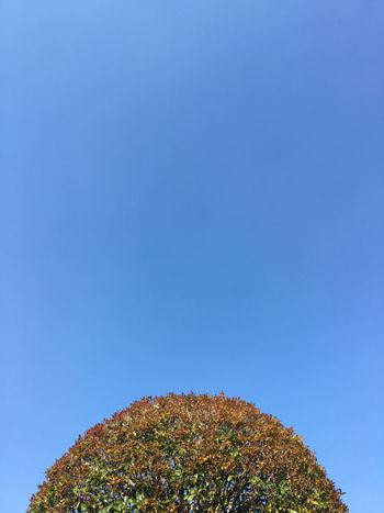TCPM Blue Low Angle View Clear Sky Beauty In Nature Tree Tranquility Nature Growth Day Sky EyeEm Beauty In Nature