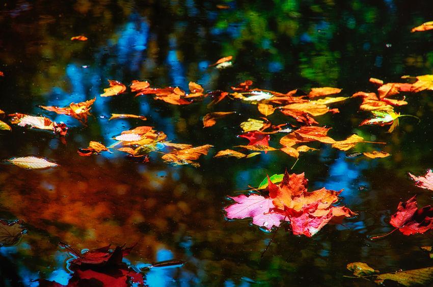 Colors Afloat. Autumn Autumn Colors Autumn Leaves Creek Nature No People Outdoors Season