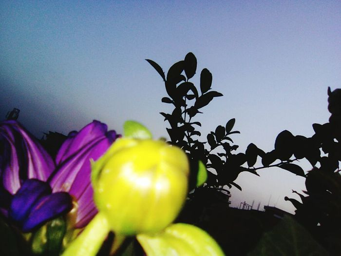 Green On The Roof Enjoying Life City Life Evening View Sky Nature Taking Photos Evning Sun Flower