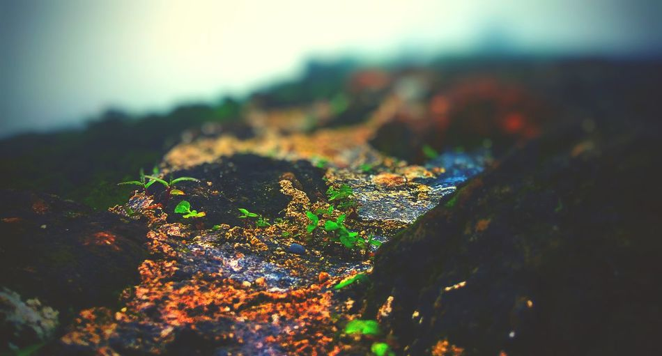 Landscape Nature Beach Rock - Object No People Moss Sea Outdoors Hill Scenics Grass Day Close-up Beauty In Nature Sky Focus On Foreground EyeEm Best Shots Mountain Springtime EyeEm Best Edits First Eyeem Photo Personal Perspective Illuminated Defocused High Angle View
