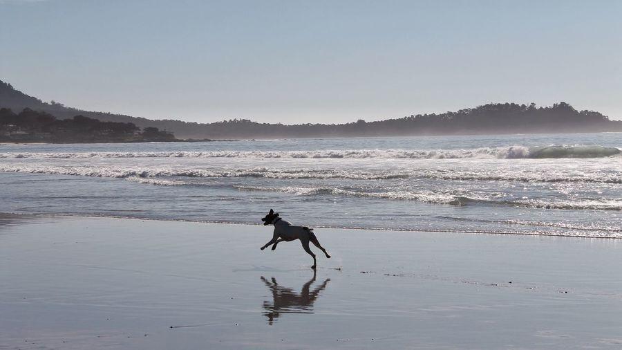 Break The Mold Femalephotographerofthemonth EyeEm Gallery Tadaa Community Silhouette Silouette & Sky Beach Running Running Dog Sea Beachphotography