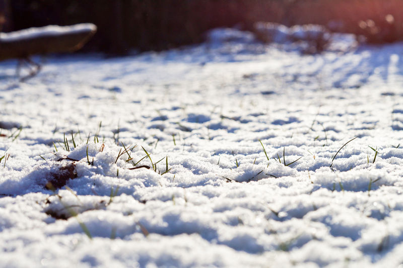 Close-up of snow covering field