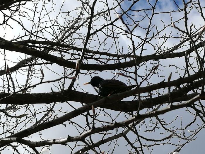 Bird Branch Nature Starling Spring