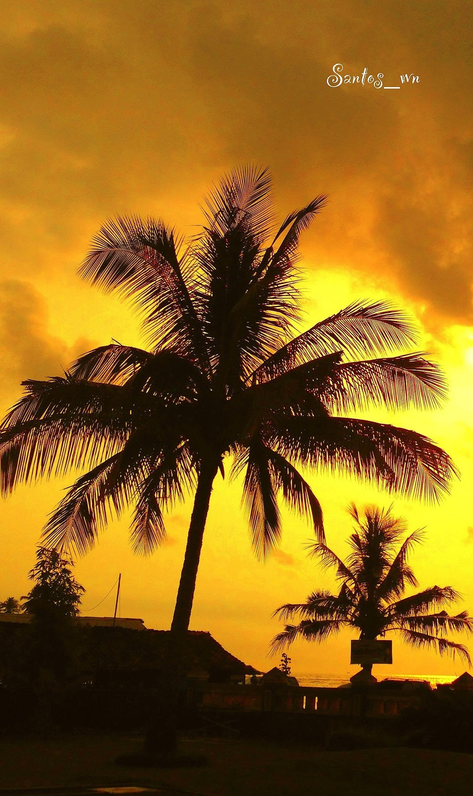 sunset, silhouette, orange color, palm tree, tree, sky, scenics, beauty in nature, tranquility, tranquil scene, nature, idyllic, dramatic sky, growth, romantic sky, outdoors, no people, sun, dusk, low angle view