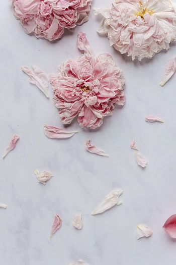 Flower High Angle View No People Indoors  Table Fragility Close-up Flower Head Marble Directly Above Peony  Faded Fading Fading Beauty Day StillLifePhotography Stillife Blossom Decay Decayed Beauty Rosé White White Background Structures & Lines Structures