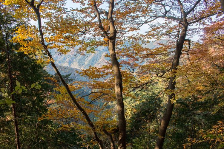 Mt.Takao Trees Plants Autumn Leaves Nature Japan On A Hike