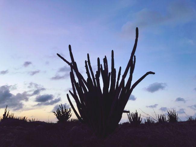 Antilles Dutch Caribbean Caribbean Silhouette Island Travel Arid Landscape Arid Climate Cactus Sky Growth Nature Saguaro Cactus Outdoors Plant Cloud - Sky No People Beauty In Nature Day Desert Close-up