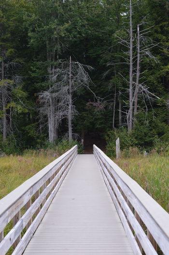 Footbridge along trees in forest