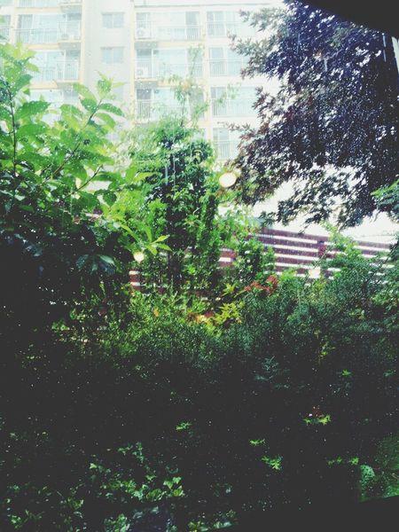비오는 날 Rainy Afternoon. Cafe