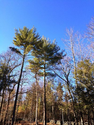 The trees in the Catskills. Catskill Mountains Woodstock West Hurley