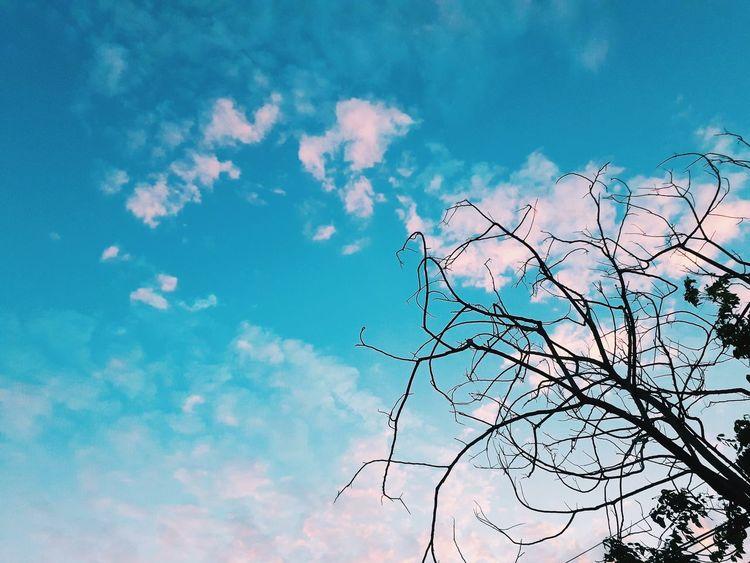 Bird Flying Pixelated Flock Of Birds Backgrounds Silhouette Spread Wings Sky Cloud - Sky