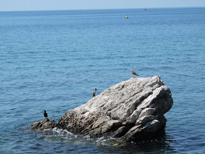 Seagull perching on rock in sea