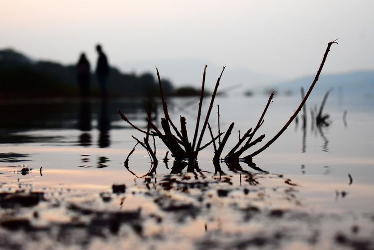 Close-up of plants against calm lake at sunset