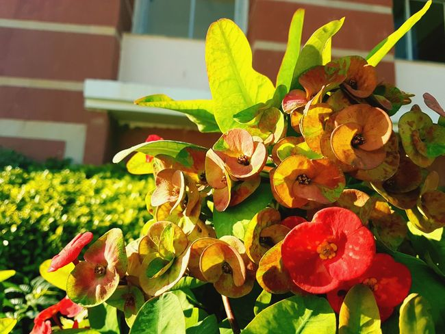 #flowers #greenleaf #blurredbackground #winters #sunkissed #highcontrast #selectivefocus Leaf Close-up Plant Petal Pollination
