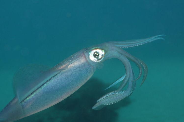 Close-up of squid swimming in sea