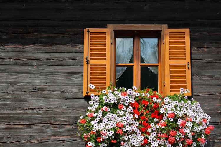 Architecture Building Exterior Built Structure Day Flower Growth House Nature No People Outdoors Plant Residential Building Window Window Box