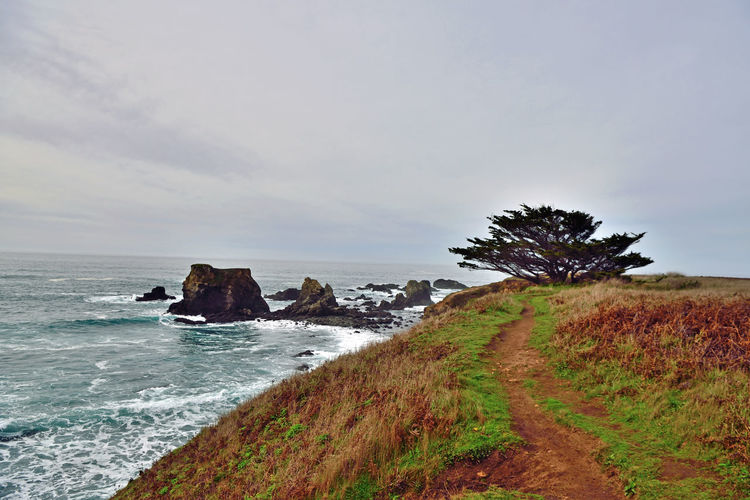 Hiking the Coast at Jug Handle 3 Mendocino County Jug Handle State Natural Reserve 776-acre Park California State Parks Pacific Ocean Coast The Ecological Staircase Ecological Succession Five Wave-cut Marine Terraces Formed By Glacier, Sea & Tectonic Activity Geology Cliff Cypress Tree Headlands Rocks Waves Seascape Nature Beauty In Nature Nature Collection Rugged Surf Landscape_Collection Power In Nature Coastal Feature Rocky Coastline Eroded Natural Arch Crashing Surf Tide
