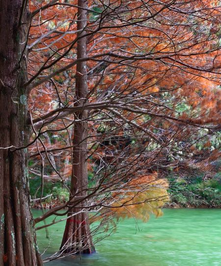It was a windy day. A Waterside Falling Pine Tree Nature Beauty In Nature Tranquility Water Autumn Branch Scenics Outdoors No People Day Lake Tree Trunk Bare Tree Leaf Tranquil Scene
