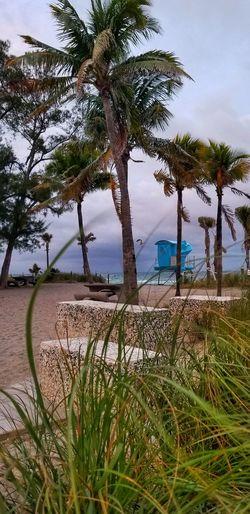 Tree Water Sea Palm Tree Beach Sky Horizon Over Water Grass