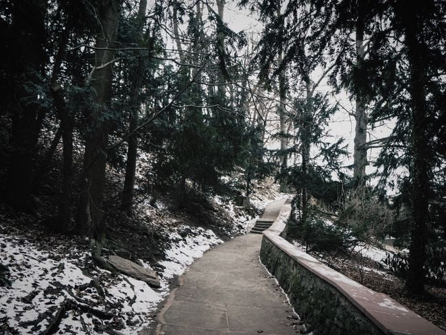 Colour Your Horizn Home Walking Around Spazieren Und Fotografieren Spaziergang Walking Around Taking Pictures Snow Winter Way Up Stairs Path Way Olympus Lightroom Tree Nature Tranquility No People The Way Forward Outdoors Beauty In Nature Day Forest