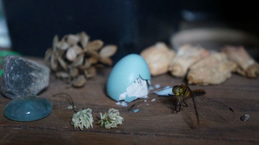 Close-up of insect and other items on table