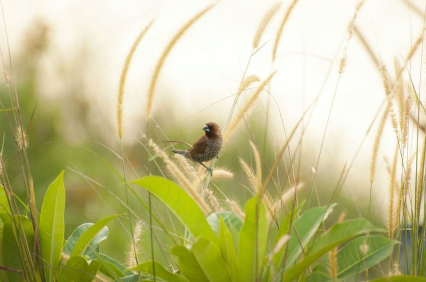 Small birds that are lively under the afternoon sun Wild Animal Wild Nature Backgrounds Beauty Bird Travel Photography Flower Insect Rural Scene Defocused Leaf Close-up Animal Themes Grass Plant Sky Wildflower Stamen In Bloom Botany Blooming Flower Head Pollen Plant Life Growing Bud