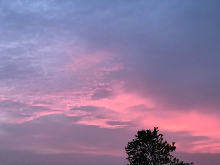 Tree Sky Cloud - Sky Beauty In Nature Pink Color Tranquility Romantic Sky Outdoors