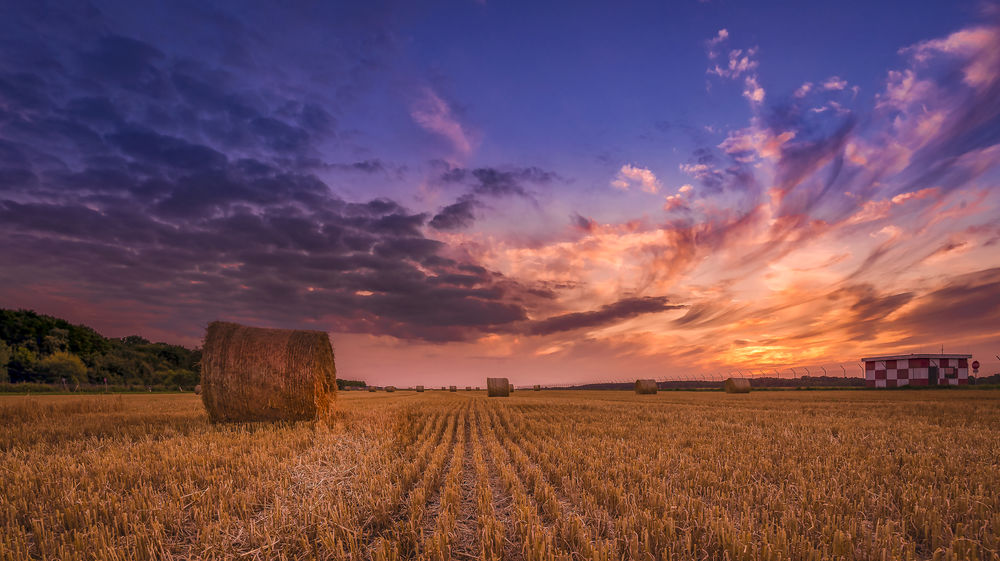 Sunset near airport Landscape Sky Agriculture Field Cloud - Sky Plant Land Nature Sunset Beauty In Nature Scenics - Nature Cereal Plant Dramatic Sky Summer