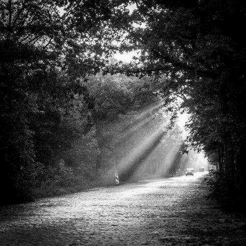 Blackandwhite Car Day Early Morning Forest Rays Of Light Street Sun Sunlight Sunrise Tree